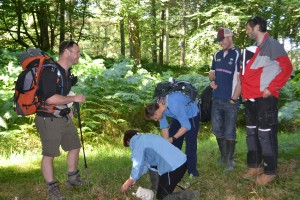 """ Forest foraging for fungi"""